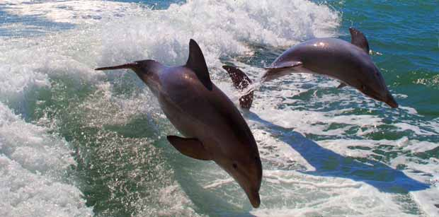 Clearwater Sea Screamer Tour with Dolphins