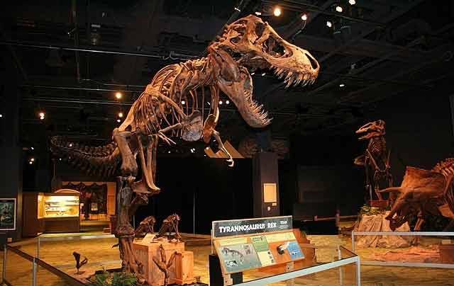 Orlando Science Center Exhibit