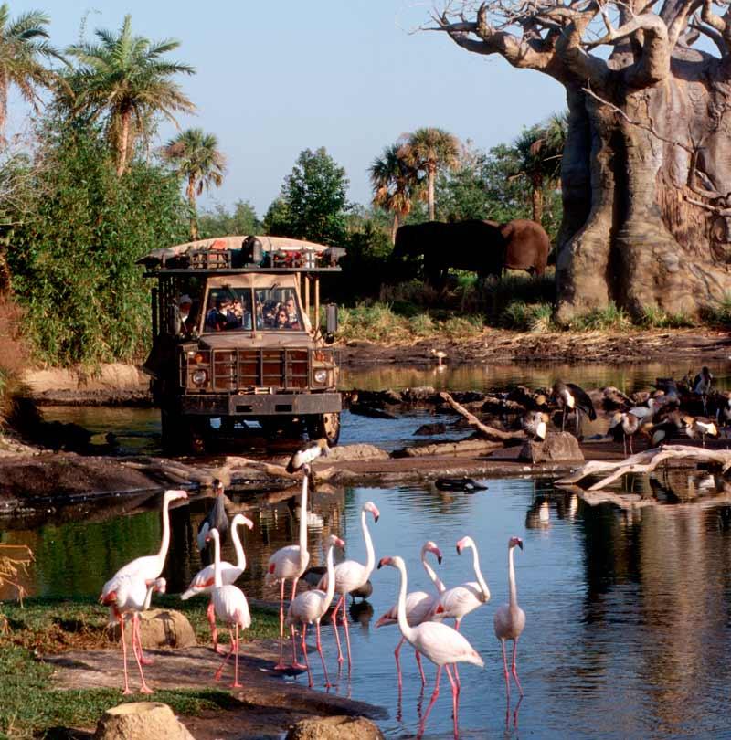 Kilimanjaro Safaris Tour Animal Kingdom