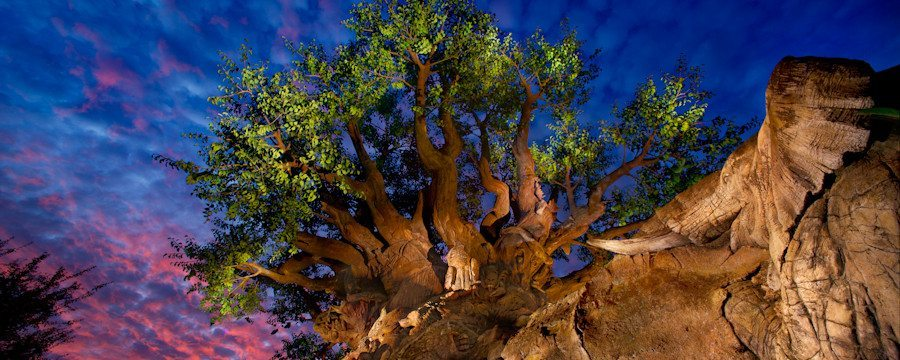 Disney's Animal Kingdom tree-of-life