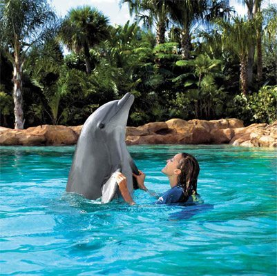 Discovery-Cove-Dolphin
