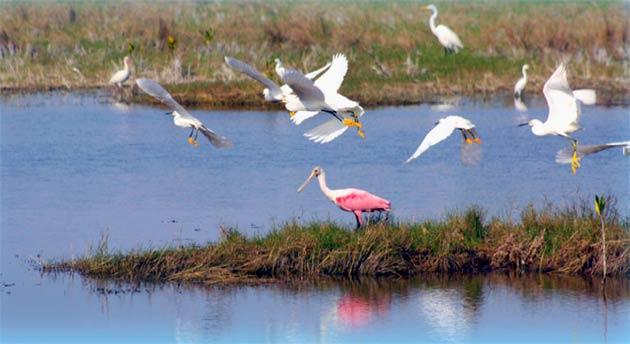 Captain Mitch's Airboat Through The Everglades Birds