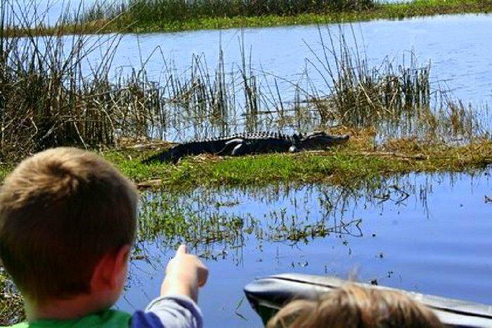 Wild Florida S Best Adventures Orlando Attractions