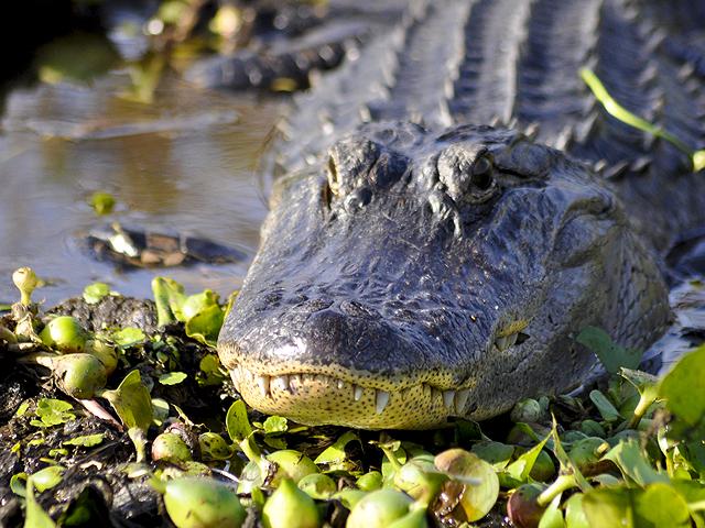 Reptile rule