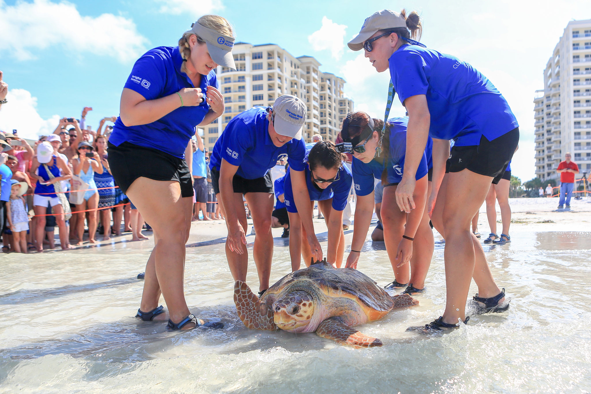 Clearwater Marine Aquarium Turtle Release