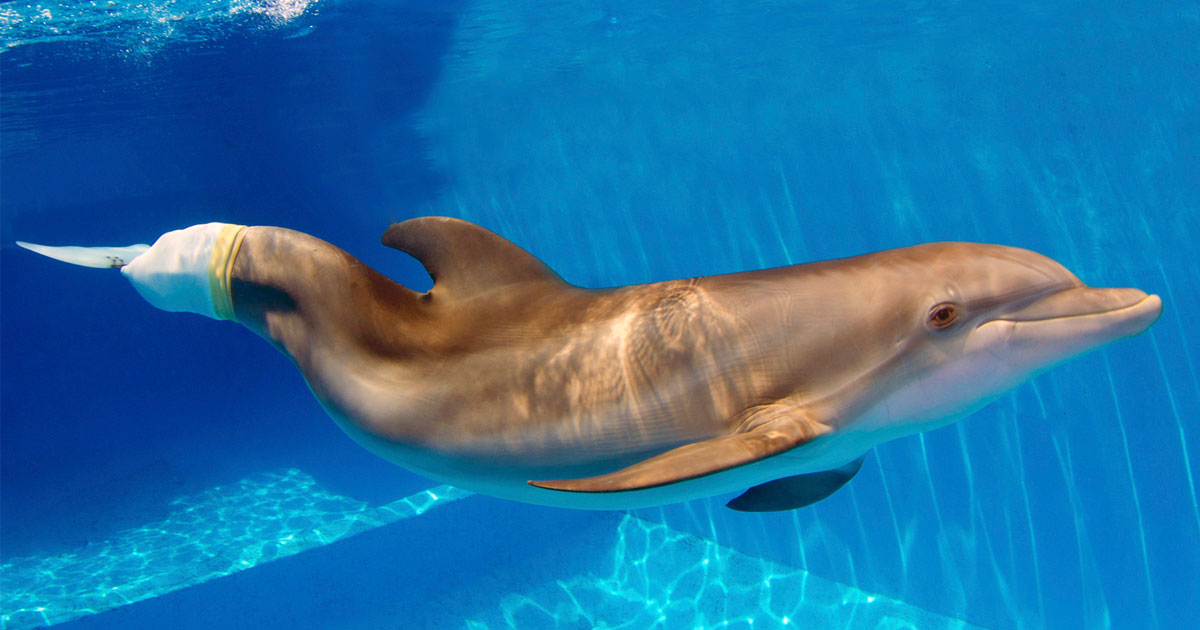 Dolphin Tales at Clearwater Marine Aquarium