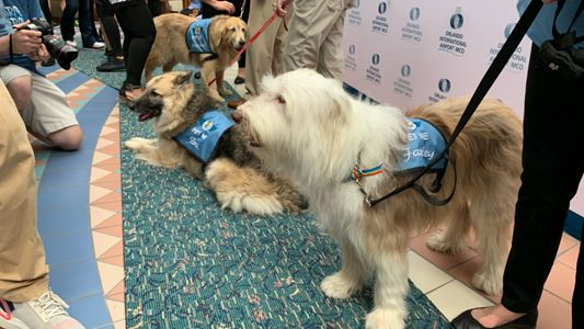 Paw Pilots To Greet Travelers At Orlando Airport