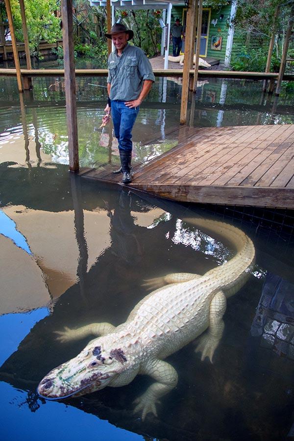 Gatorland White Gator