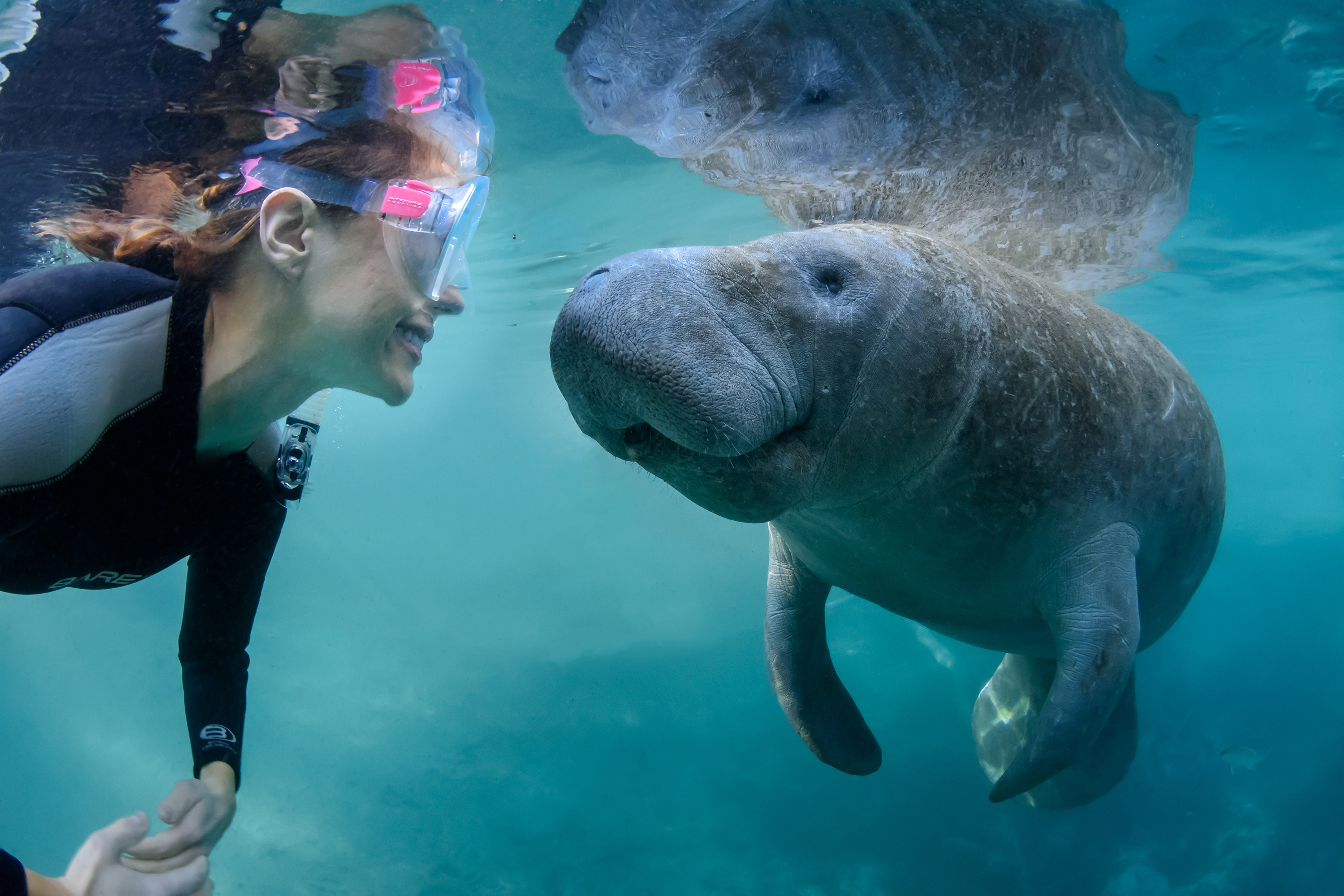Featured_manatees