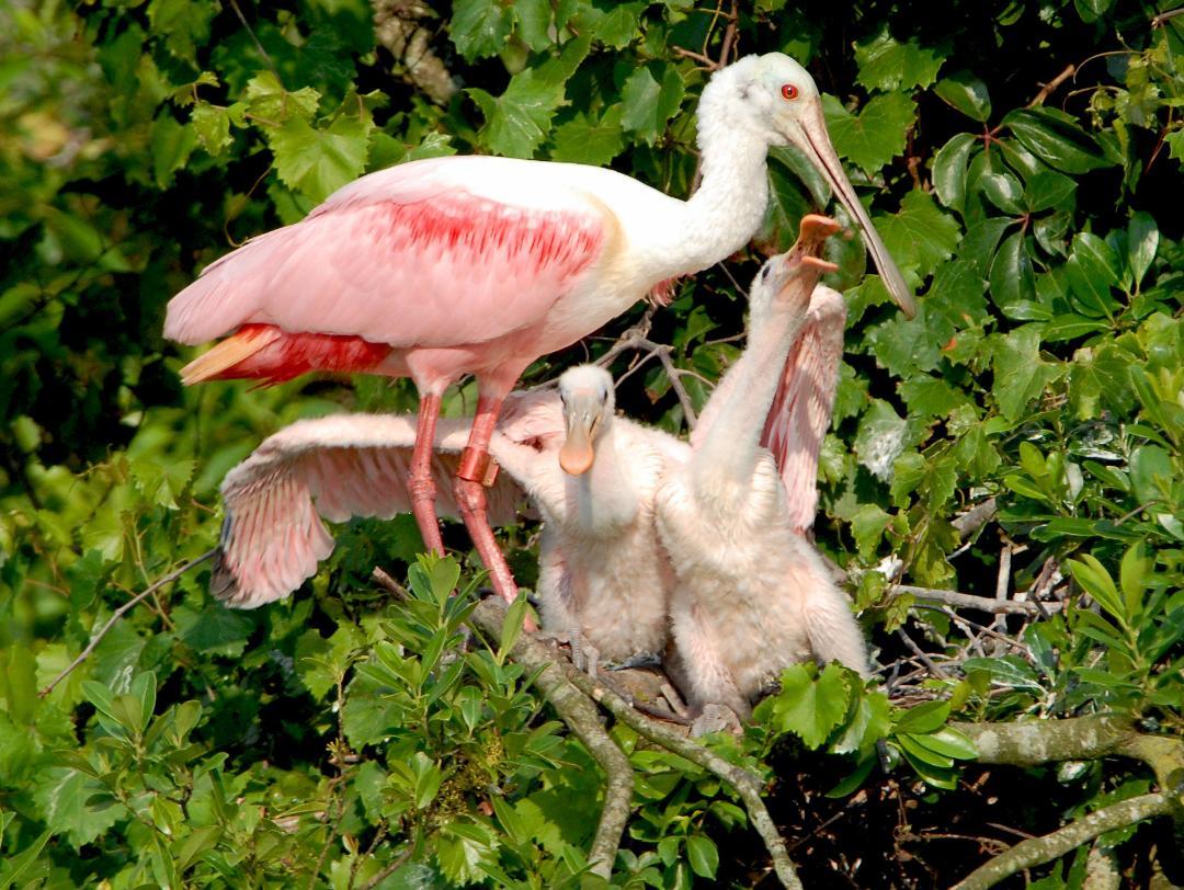Gatorland Birding Photo Pass