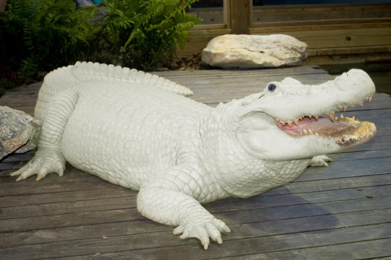 Gatorland Reflects on 70 Years of Success