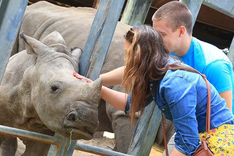 White Rhino Encounter