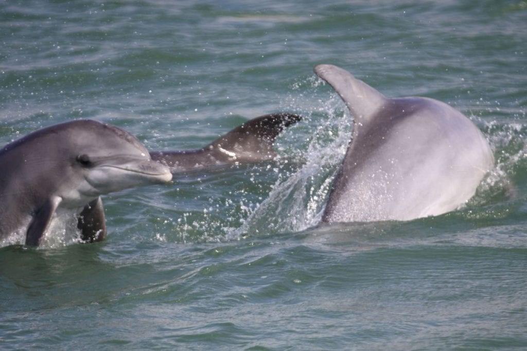 Dolphin updates