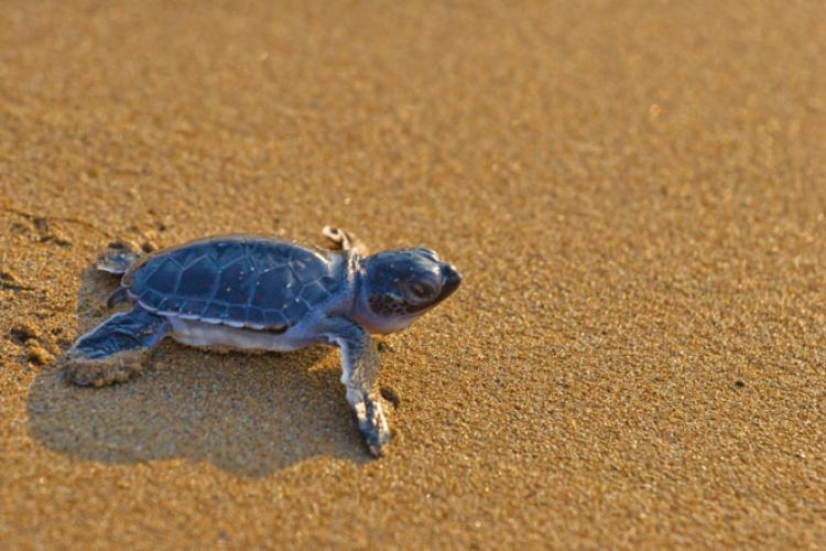 Sand and Turtles