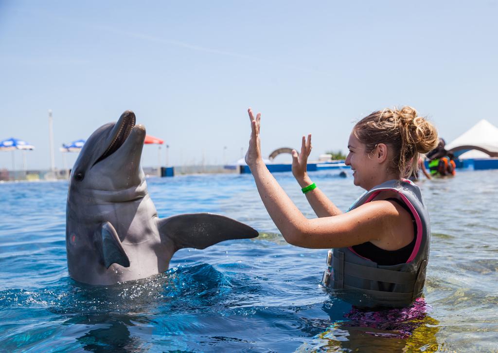 Marine Dolphin Adventure