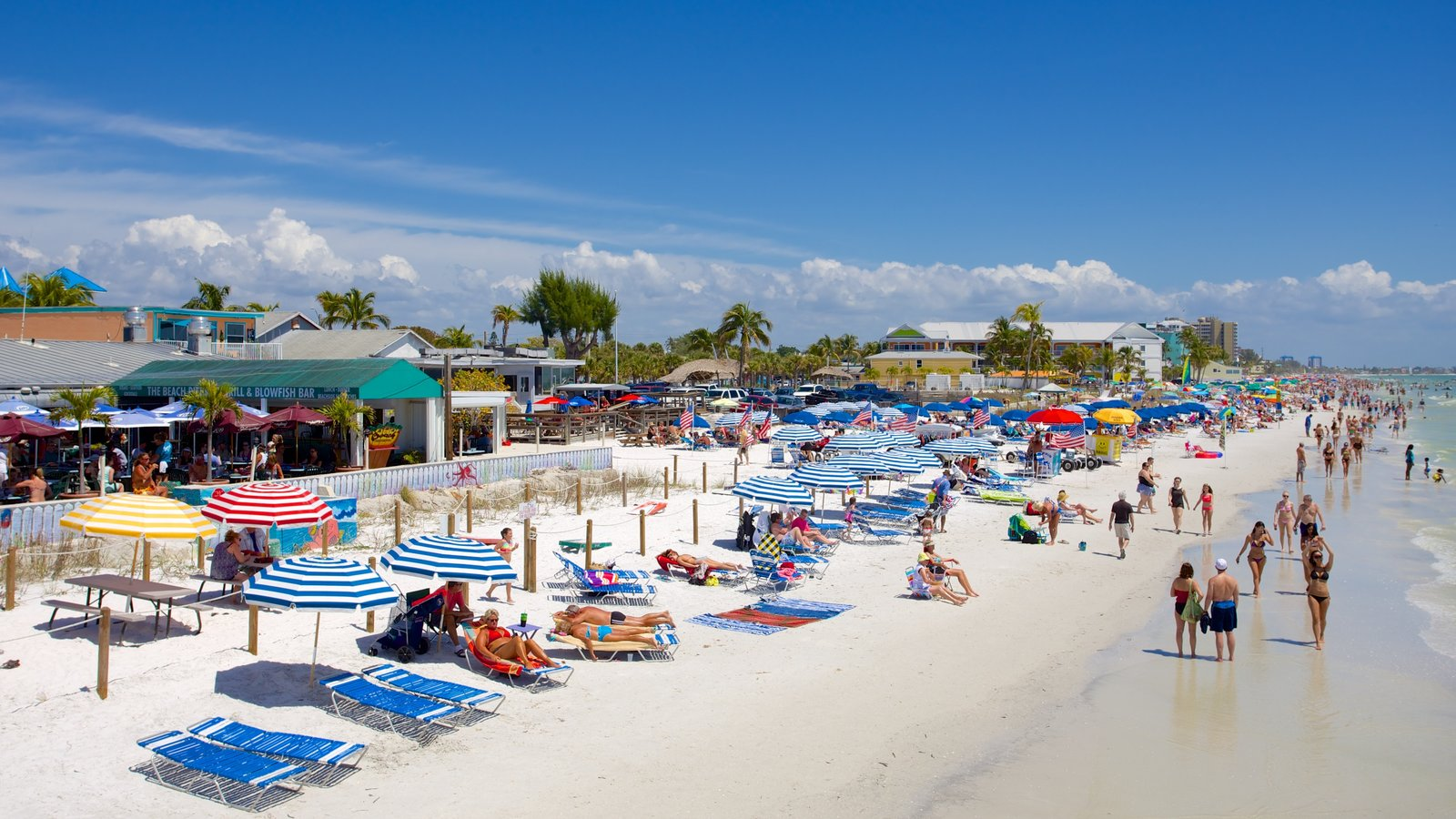 Nature's Calling From the Beaches of Fort Myers & Sanibel