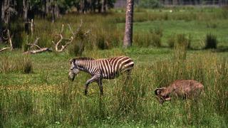 Safari frolicking