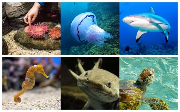 SeaLife Orlando