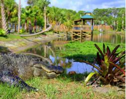 Wild Florida Wildlife Park Animal Encounter