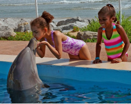 Dolphin Experience in St Augustine