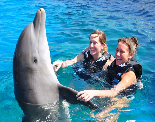 Swim with Dolphins in St Augustine