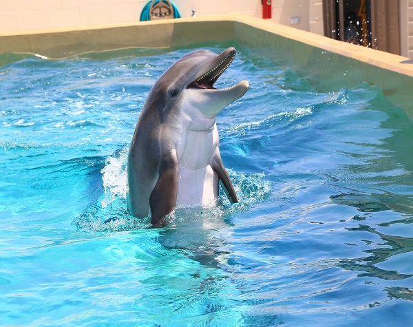 Clearwater Marine Aquarium florida tickets