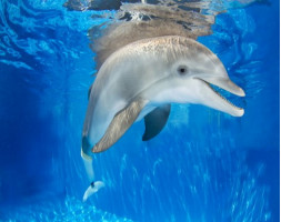 Clearwater Beach & Lunch Including Clearwater Aquarium and Dolphin Tale