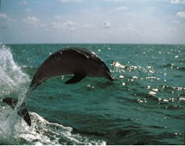 Clearwater Beach & Lunch Including Dolphin Encounter Boat Ride