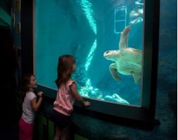 Clearwater Marine Aquarium Admission