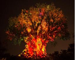 Disney After Hours Ticket - Animal Kingdom