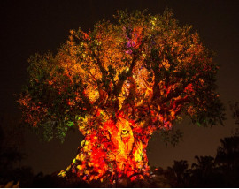 Disney After Hours Ticket - Animal Kingdom