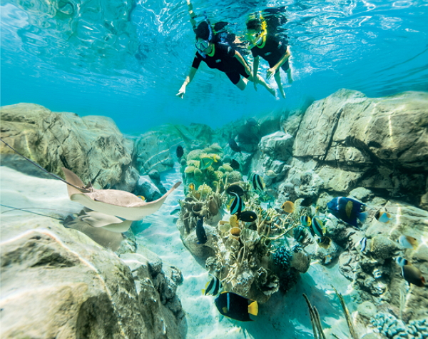 Discovery Cove Ultimate Non-Dolphin Swim Package with FREE Parking