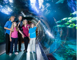 Sea Life Orlando at ICON Orlando 360