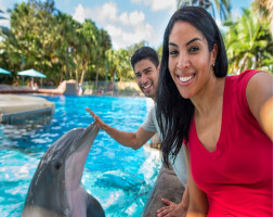SeaWorld® Dolphin Encounter