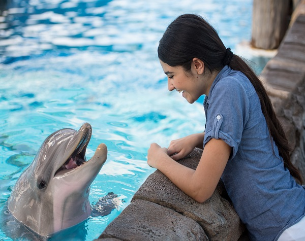 SeaWorld® Dolphin Encounter