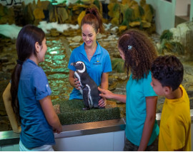 SeaWorld® Penguin Encounter