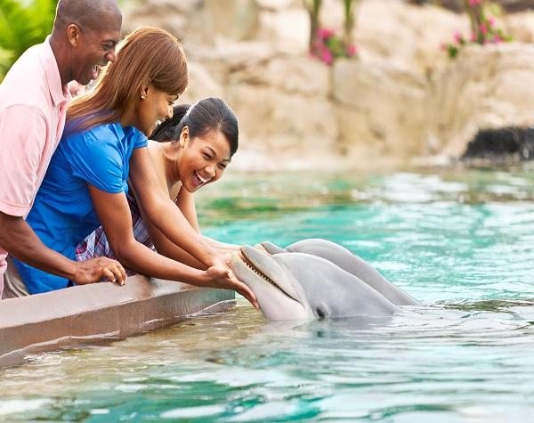 SeaWorld® VIP Private Tour