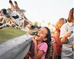 Busch Gardens® Serengeti Safari