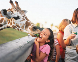 Busch Gardens Serengeti Safari