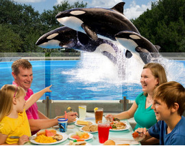 SeaWorld In Park Experiences
