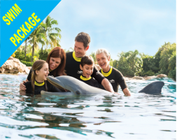 Discovery Cove Dolphin Swim Package - PRICES FROM