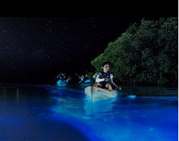 Guided Bioluminesence and Moonlight Kayak Tours