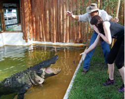 Gatorland Trainer-for-a-Day