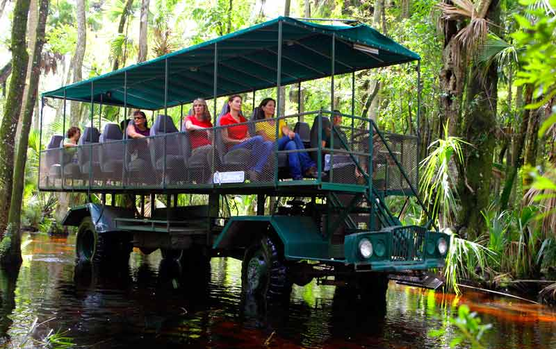 Kissimmee Swamp Buggy Tour