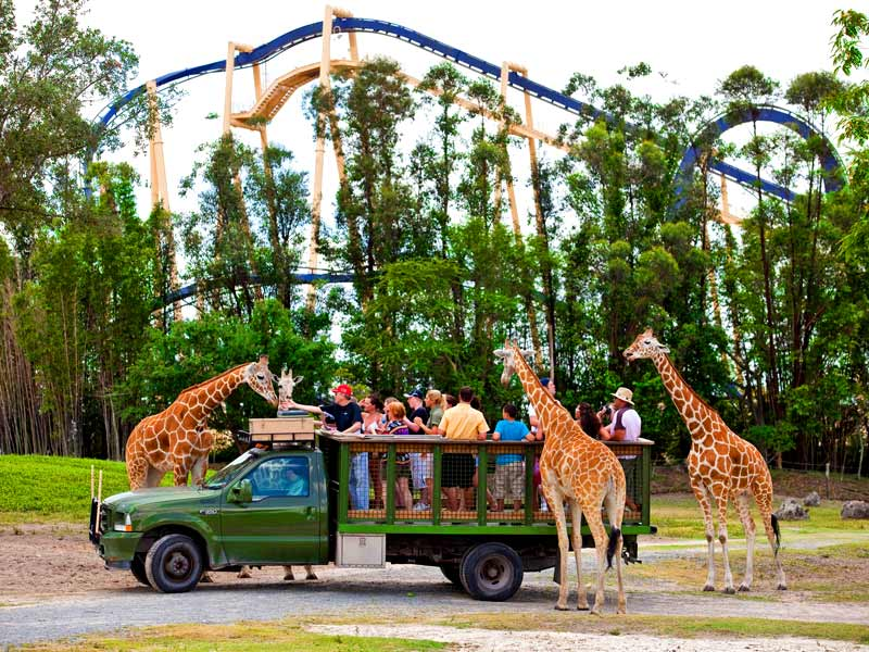 Busch gardens tampa bay enjoy animal encounters and How far is busch gardens from orlando