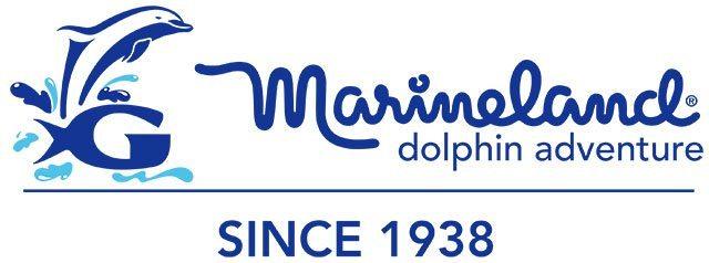 Marineland Dolphin Adventure Orlando | Enjoy dolphins up-close
