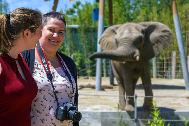 Tampa Zoo elephant encounter