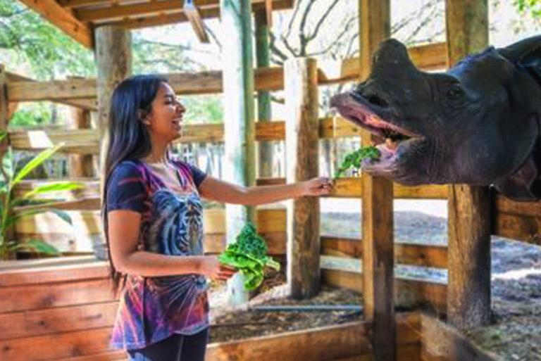 Tampa Zoo indian rhino