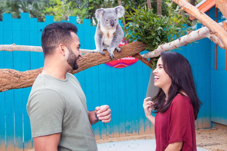 Tampa Zoo koala