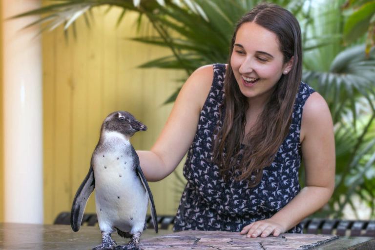Tampa Zoo penguin encounter